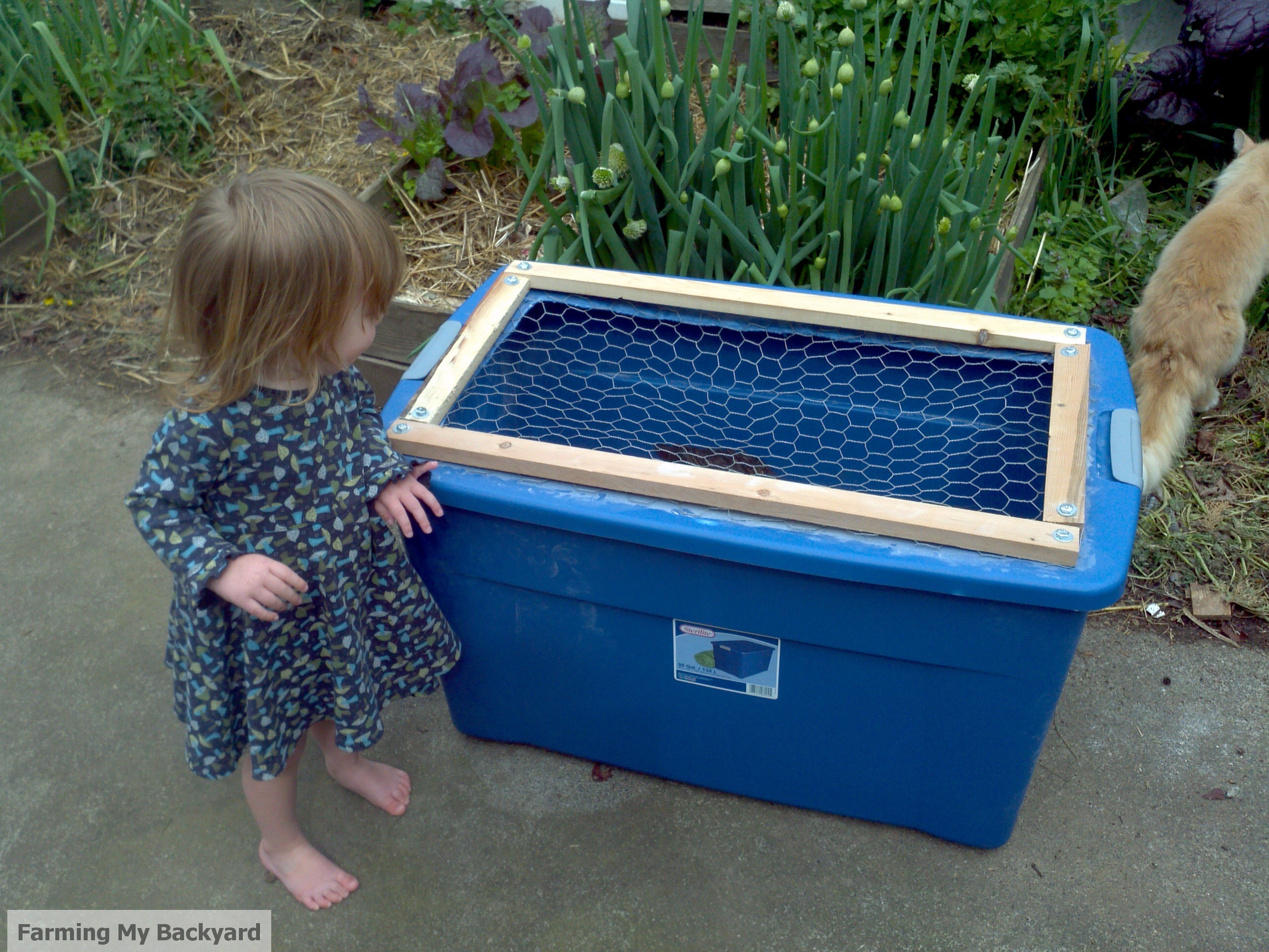Backyard Brooder Box brooder: the baby chick stage | the grange