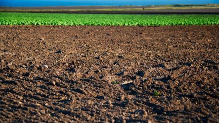 loam-soil